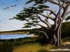 carmel cypress (zapp)