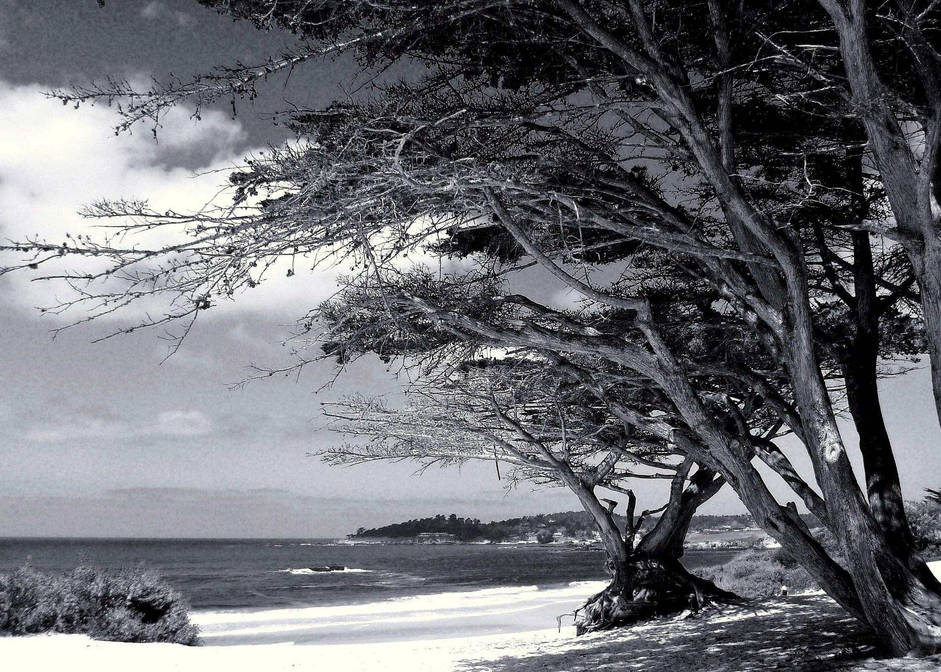 carmel beach bw etsy